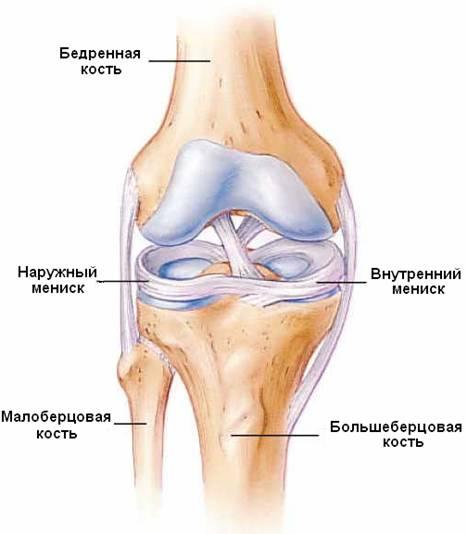 Что такое миниск каленного сустава увеличеные суставы пальцев
